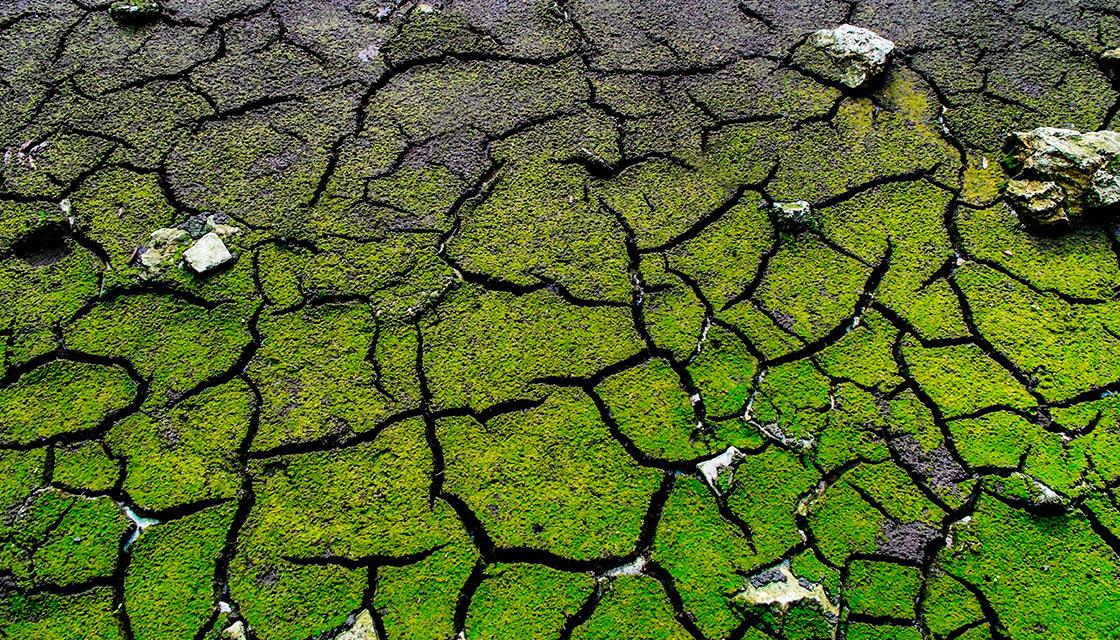 Förorenad mark